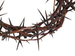crown of thorns 4
