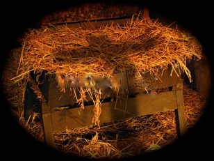 christmas-backgrounds-manger-l
