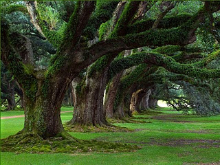 natural_tree_1600x1200