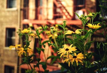 new-york-city-flowers-along-the-high-line-park-vivienne-gucwa