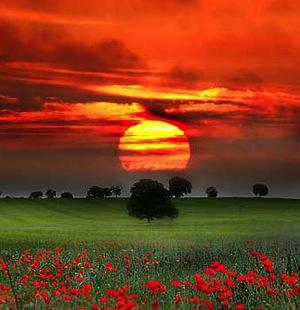 imagenes-paisajes-flores copy