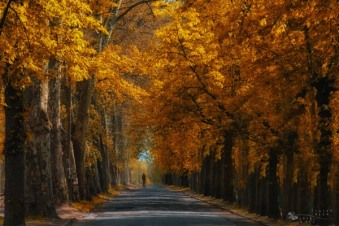 Stay-or-Leave-by-Ildiko-Neer