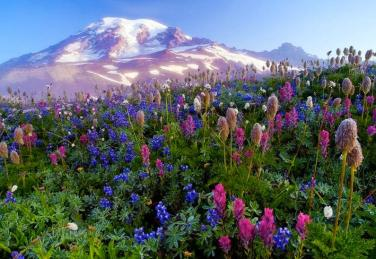Mountain and flowers 9