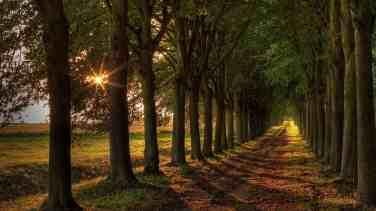 Boulevard-sun-trees-road_1366x768
