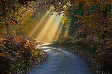 Road Shafts of Autumn Sunlight