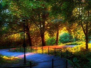 Last-sunlight-in-the-park-500x375