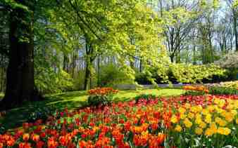 spring_park_wallpaper_spring_nature_wallpaper_1280_801_widescreen_1215