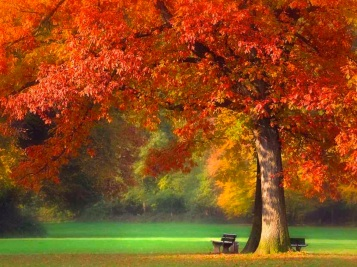 autumn-fall-nature-tree-Favim.com-241774