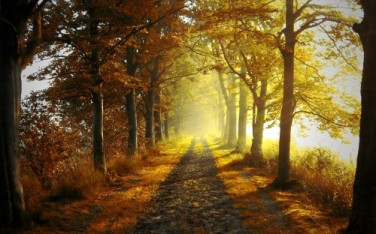 Road-at-autumn-wallpaper-500x312