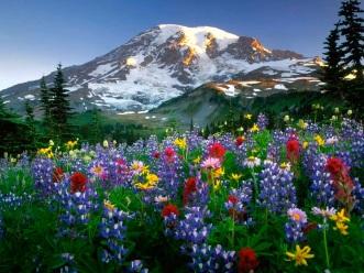 fondos-pantalla-paisajes-flores-1024 copy