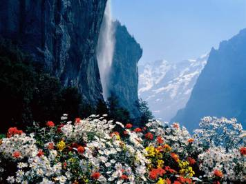 Mountain flowers 4