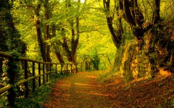 Path-through-the-woods-covered-with-copper-colored-leaves
