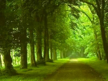 Beautiful_roads1