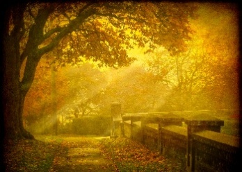 Autumn Mist Wallpaper__yvt2