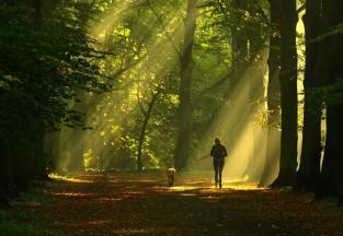 walking thru woods 2