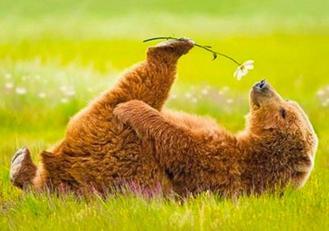bear - flower