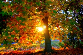 Tree sunlight 2