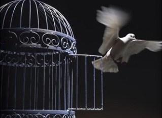 freedom dove