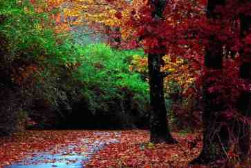 Autumn_Forest_and_Landscape_Color copy