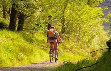 cyclist_forest copy