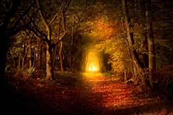 light-path-dark-copy