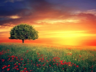 27737-tree-of-paradise-copy