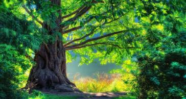 wallpaper-spectacular-tree