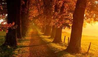 Autumn-sunrise-in-the-park-country-path-in-the-forest_1024x600