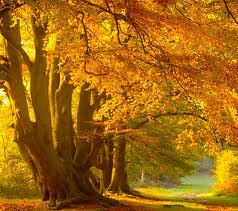 Autumn 22