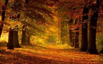 autumn-path-1