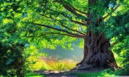 tree 6 copy