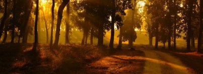 133873__morning-the-forest-edge-of-the-road-the-sun-the-light-rays-nature_p copy
