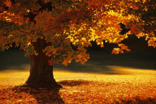 autumn-events-santa-ynez-valley-thinkstock78489205